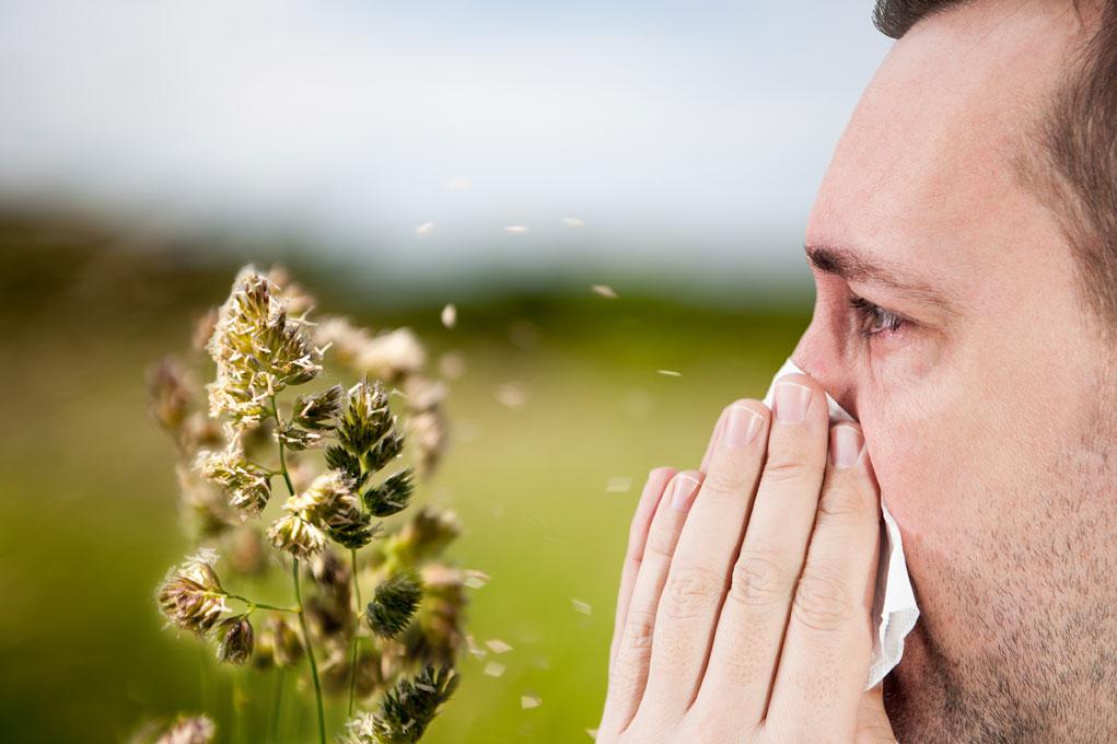 אלרגיות וחום גבוה